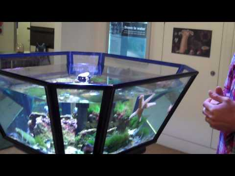 Horniman Museum's Victorian Aquarium Exhibit