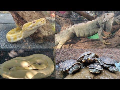 Python Iguana Turtle At Prakruti Bhavans Nature Festival