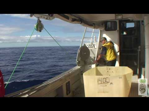 White Island (New Zealand) Deep-sea Fish Imaging And Sampling