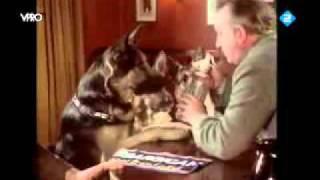 Three German Shepherds In A British Pub.