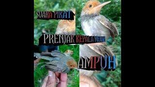 Gambar cover SUARA PIKAT PRENJAK KEPALA MERAH