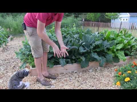 Applying An Integrated Pest Management System For The Home Garden