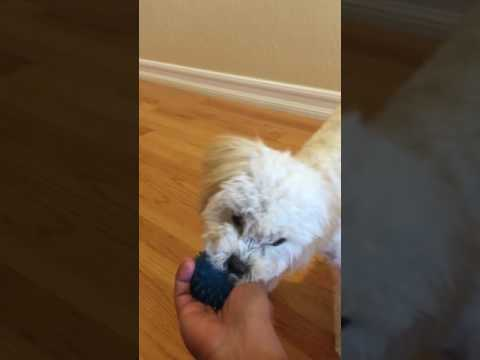 Mastering the Art of Fetch!( Groomed)
