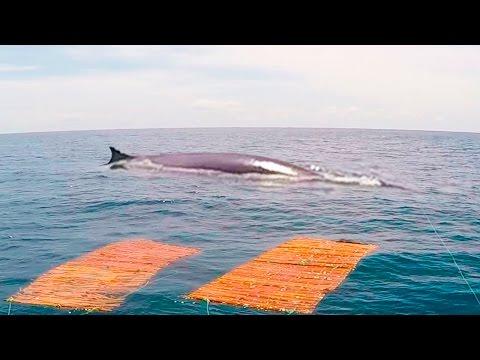 ☑️ Tremendo susto se llevan pescadores en alta mar!! - Awesome sperm whale