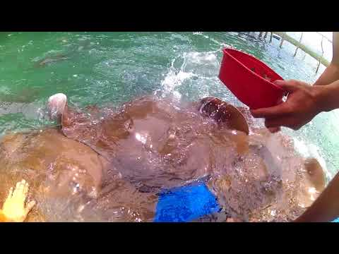 HARMLESS STINGRAY ENCOUNTER