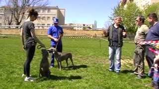 Выводка собак охотничьих пород апрель 2013