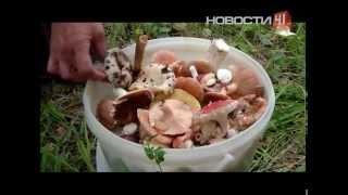 видео Как не отравиться грибами из банки.
