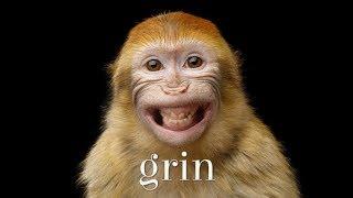 #140: grinの用法(ボキャビル・カレッジ・第140回)