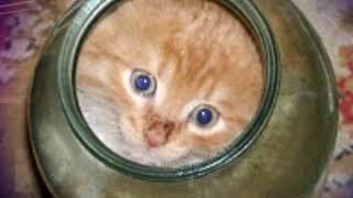 Котенок не мог вылезти из банки. Посмотри, что сделала мама кошка… Шок!