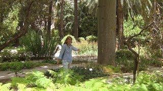Ботанический сад Валенсии.