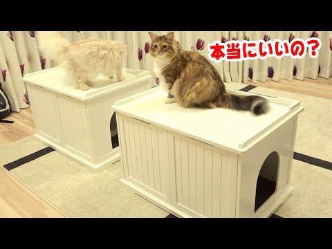猫の家がきたーーーー!