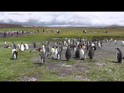 Falkland Islands, ukr.language
