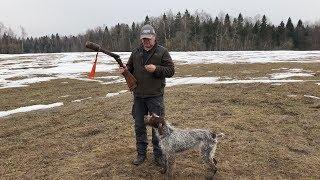 Подготовка собаки к весенней охоте на вальдшнепа.