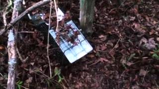 How To Set A Live Rabbit Trap