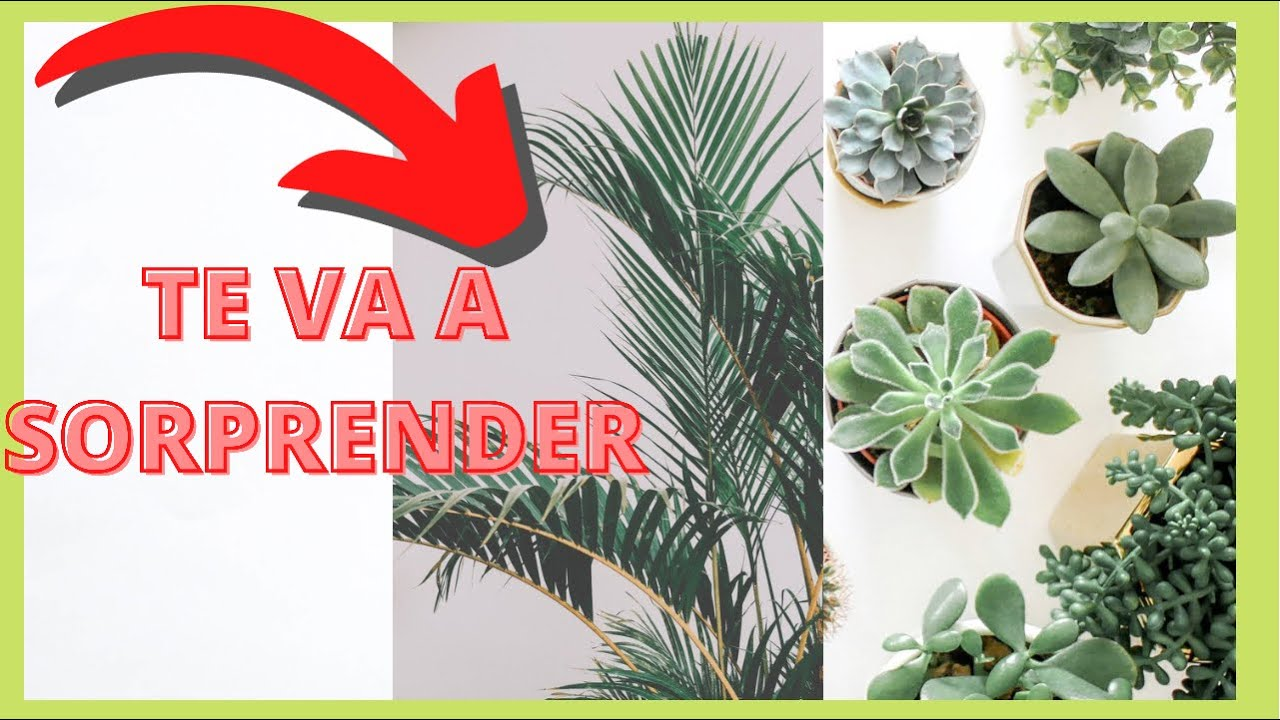 10 plantas de interior que purifican el aire youtube for Plantas bonitas de interior