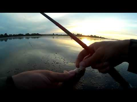 Развилка, река Неман в Советске Калининградской области. Ловля хищника, точнее пытаемся ловить!