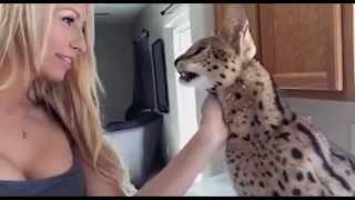 Даже дикие кошки говорят МАМА
