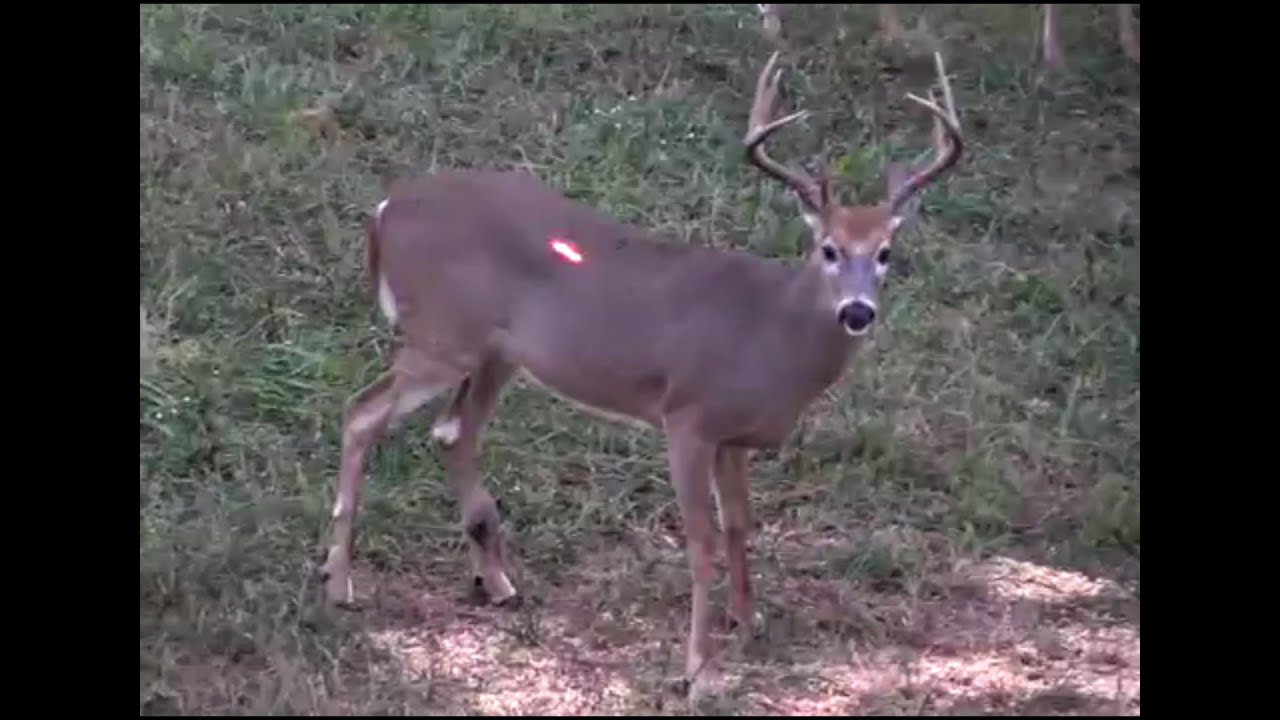Deer hunting kentucky 2016 youtube for Kentucky out of state fishing license