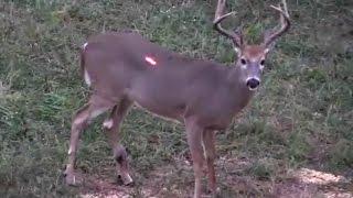 Deer Hunting Kentucky 2016
