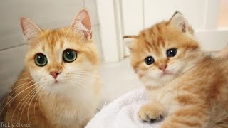 Please! Play with us!  Cat with Big Eyes and her kittens 🥰 Meowing and purring
