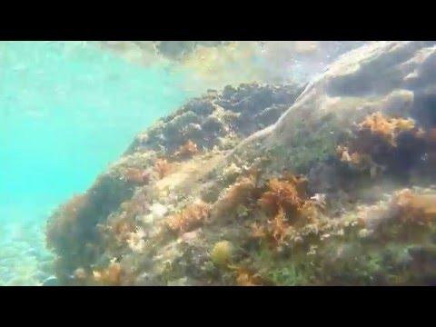 GoPro HERO 4 silver underwater: Croatian subsea