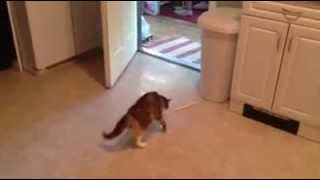 Funny Scared Cat OHHHHH