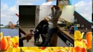 Собаки прыгают на людей   Веселая подборка видео с животными