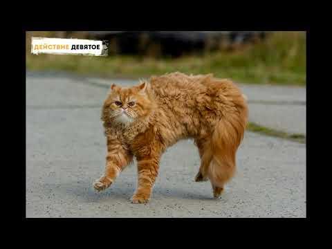 Смешные коты кошки убойные за 17 октября
