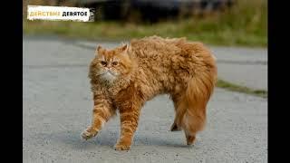 Смешные коты и кошки - убойные приколы  с озвучкой видео мемы с котами 2019