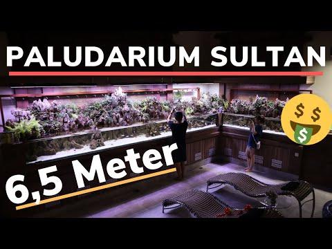 akuarium-sultan-project-paludarium-6,5-meter-the-aquatic-freak-style-part-2