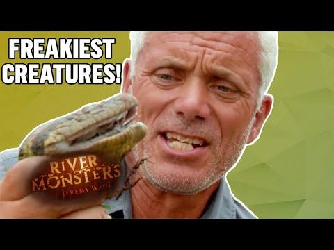 Freakiest Creatures | COMPILATION | River Monsters