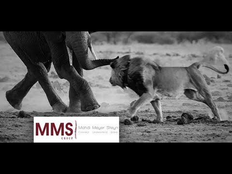 Gauteng Chartered Accounting Services | MMS Group