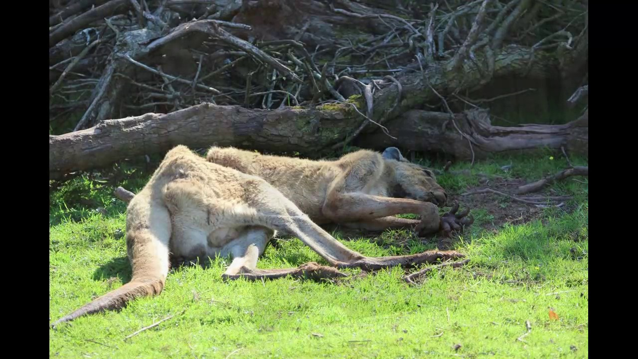 Almost 500 Animals Have Died At This Zoo In Just Four -3395
