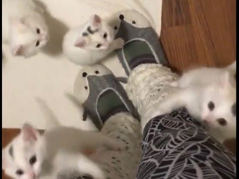 Kittens Attacks Human Mom With So Much Love