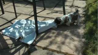 Daisy The Shih Tzu Puppy Playing In The Garden