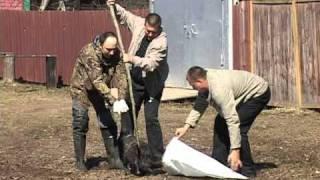 поимка бобра в реале.mpg(как ловили бобра без единого выстрела., 2011-05-03T09:56:23.000Z)