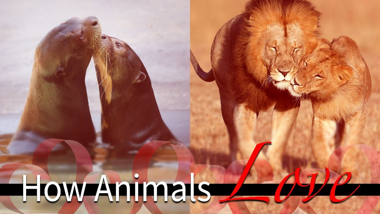 Animal Odd Couples Youtube how animals love
