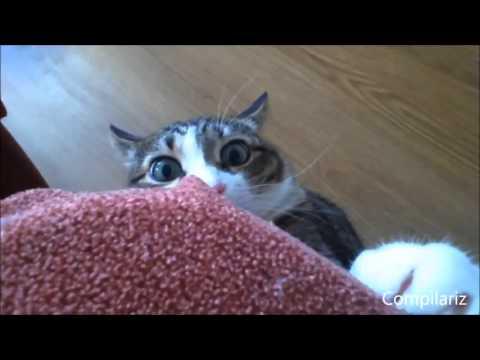 Cat pop hhh 😅😅😅😂😂😂🐈🐱