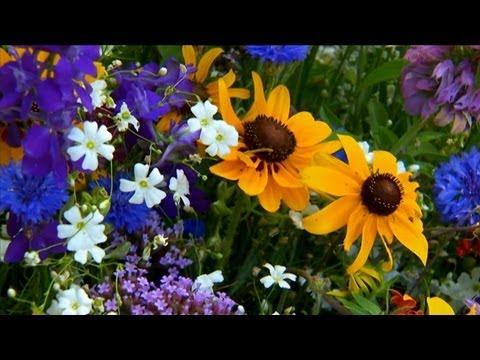 How to Grow Wildflowers | P. Allen Smith Classics