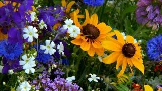 How to Grow Wildflowers | P. Allen Smith Classics
