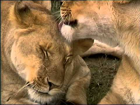 4°Parte Travel guide magical Kenya Masai Mara Kenia con Avventure nel Mondo video Pistolozzi Marco