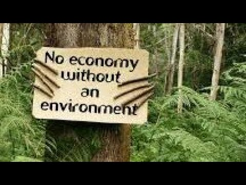 🌳World Environment Day Quotes, Messages, Slogans, Images, Pictures🌳