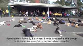 Alpha Dog Training - 56 Dogs 11 Aug 13