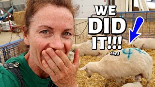 I CAN'T BELIEVE IT WORKED! (when a ewe won't feed her lambs...) Vlog 312