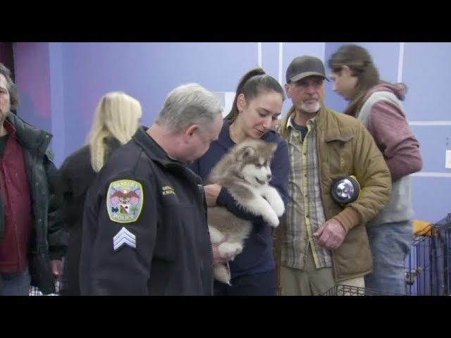 86-puppies-rescued-from-pet-store-fire