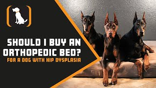 Should I Buy An Orthopedic Bed For A Dog With Hip Dysplasia?