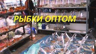 Покупка аквариумных рыб. Оптом из Польши.