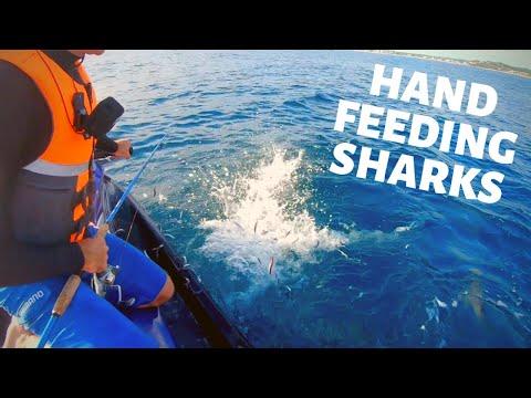 TUNA FISHING MAYHEM + SHARK FEEDING FRENZY 🦈