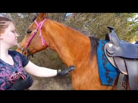 HandsOn Gloves grooming bathing massage & de-shedding horses dogs cats & small pets