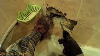 Мужчина раздробил стену в квартире ради спасения котенка. Видео